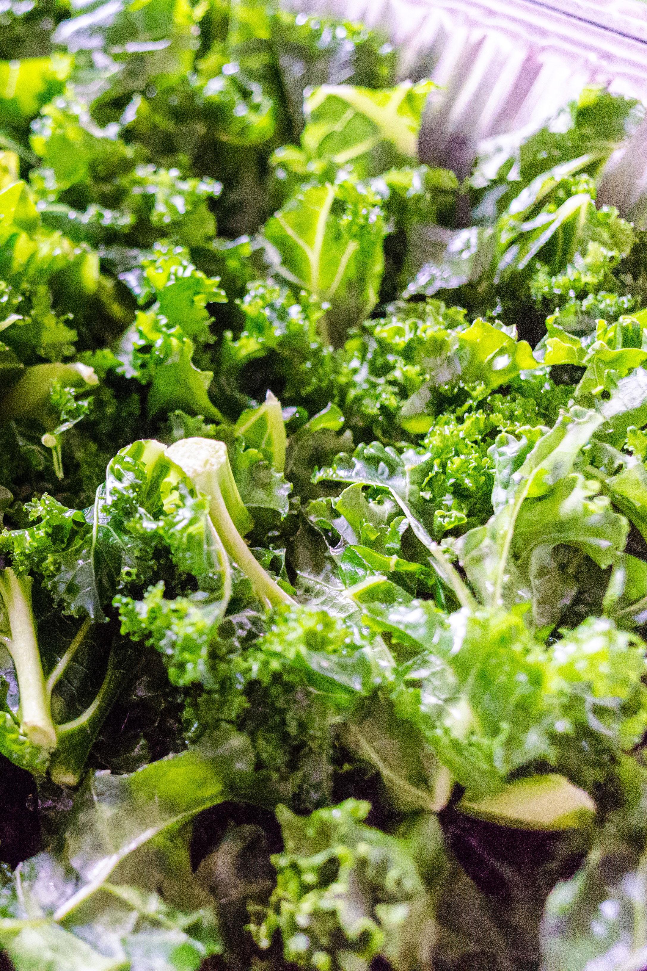 simple vegan recipes for beginners kale